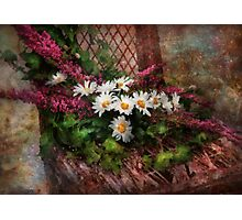 Flower - Seat Reserved Photographic Print