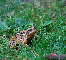 Toad of Toad Hall by BizziLizzy