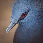 Blue Bird by Erin Valickis