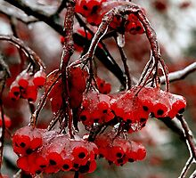 Iced berries..wish they were strawberries by jammingene