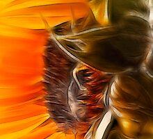 Solar Flower by hampshirelady
