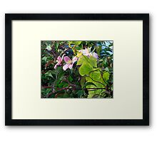 Flower dew Framed Print