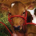 Baby Calf by Mattie Bryant