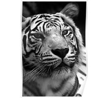 Ivory in black and white  Poster