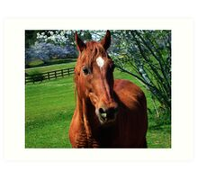 Red Equine Art Print