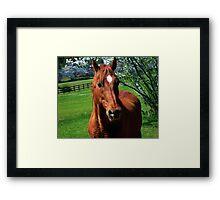 Red Equine Framed Print