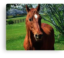 Red Equine Canvas Print