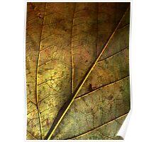 Leaf Pathways Poster