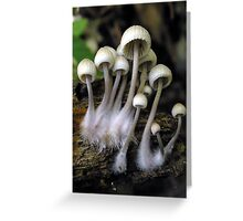 Mycena Family With Roots Greeting Card