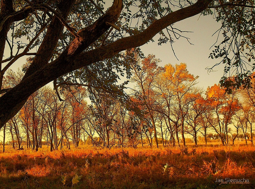 Colors of Fall ! by Jan Siemucha