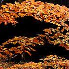 Colour of Fall, Hiawatha Park Ontario Canada by Eros Fiacconi (Sooboy)