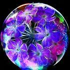 Verbena in a Bubble by Brenda Boisvert