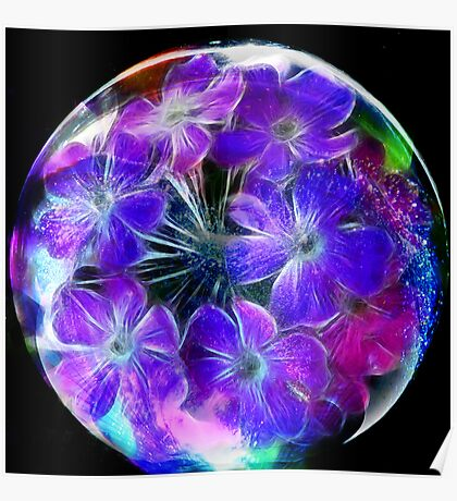 Verbena in a Bubble Poster