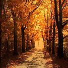 Country Road and Autumn Light by ienemien