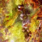 Kitchen - Wine - Grapes by Mike  Savad
