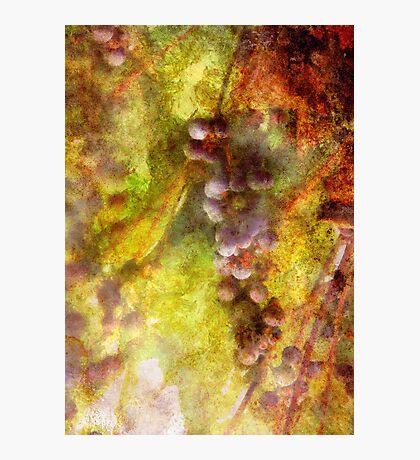 Kitchen - Wine - Grapes Photographic Print