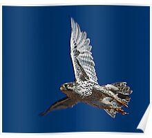 100210 Prairie Falcon Poster