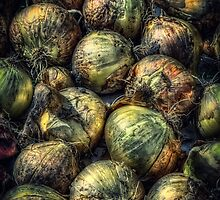 Harvest Onions by Myron Watamaniuk