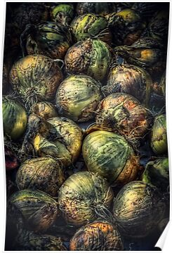 Harvest Onions by Myron Watamaniuk