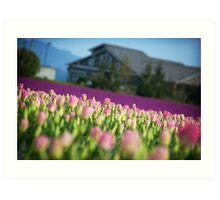 Mount Vernon Tulips Art Print