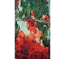 Shedding Time-Squished Strawberry-Red Witch Photographic Print