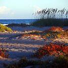 Sand Dunes at Cocoa Beach, FL  by Susanne Van Hulst