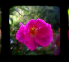 Garden TTV Triptych by Mark Wilson