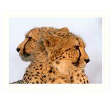 Two Headed Cheetah? Art Print