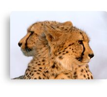 Two Headed Cheetah? Canvas Print