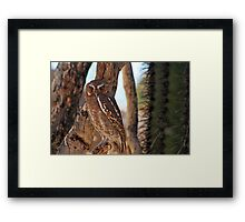 Elf Owl... Framed Print
