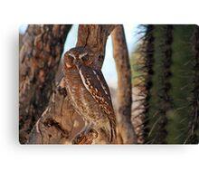 Elf Owl... Canvas Print