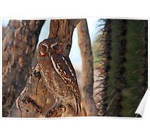 Elf Owl... Poster