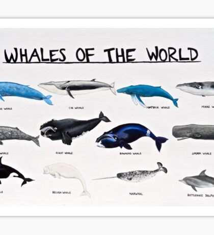 Whales Of The World Chart Sticker