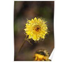 Seeding Paper Daisy Poster