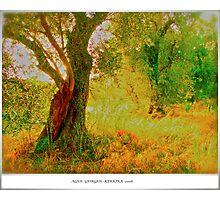 Agios Giorgios . Kerkira . Greece . 2006. by Brown Sugar . Favorites: 5 Views: 532 . THANKS WITH WAAAAWS !!!!! Photographic Print