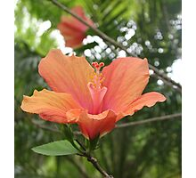 Apricot Delight  Photographic Print