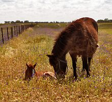 Gypsy and Foal by Leanne Robson