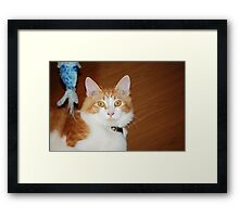 Catching Fish: Framed Print