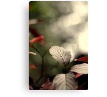 _bittersweet October_ Canvas Print