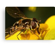 Hoverfly on yellow flower Canvas Print