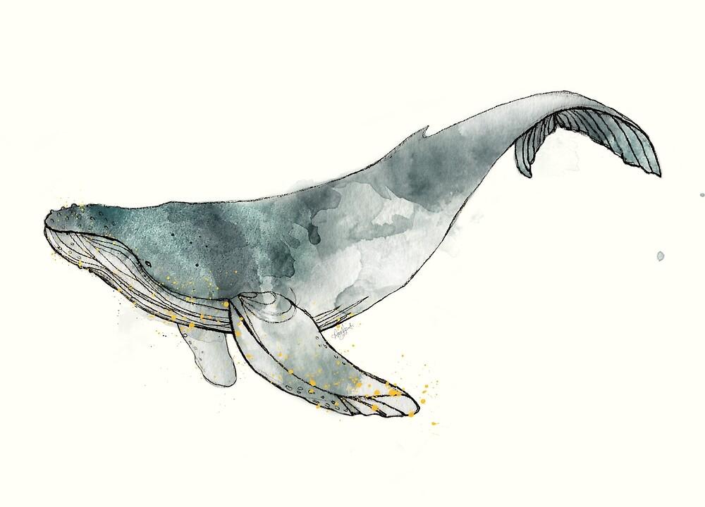 Quot humpback whale quot by amy hamilton redbubble