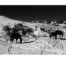 Black, White and oh so Wild Photographic Print