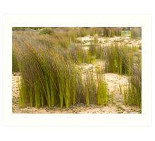 Dune Grass 3 Art Print