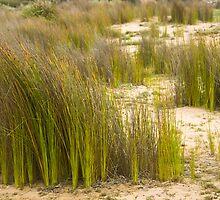 Dune Grass 3 by Werner Padarin