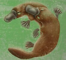 Platypus Life Cycle - Adults Mating by Karen  Hull