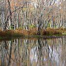 Trees Along Eels Creek, Fall 2010. by Tracy Wazny