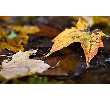 Fall Photographic Print
