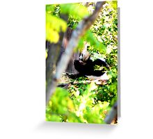 Panda Bear | Nature Greeting Card