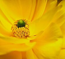 Yellow Within by littleoldhag
