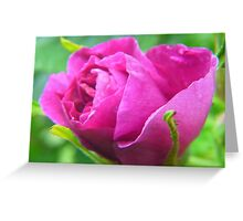 Pink Love--ly Rose Bud Greeting Card
